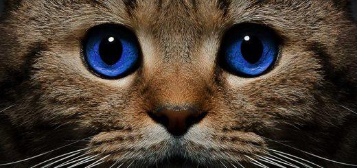 кот, предсказывающий смерть