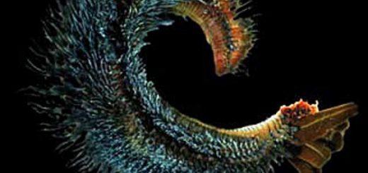 инопланетный организм