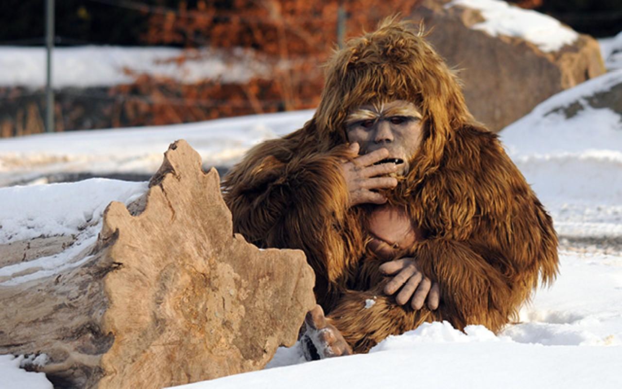 Двое «снежных людей» были засняты на видео в Польше
