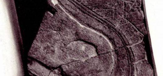 Загадочные следы от туфлей