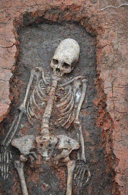 скелет с длинным черепом