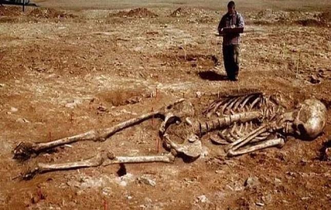 скелет гиганта