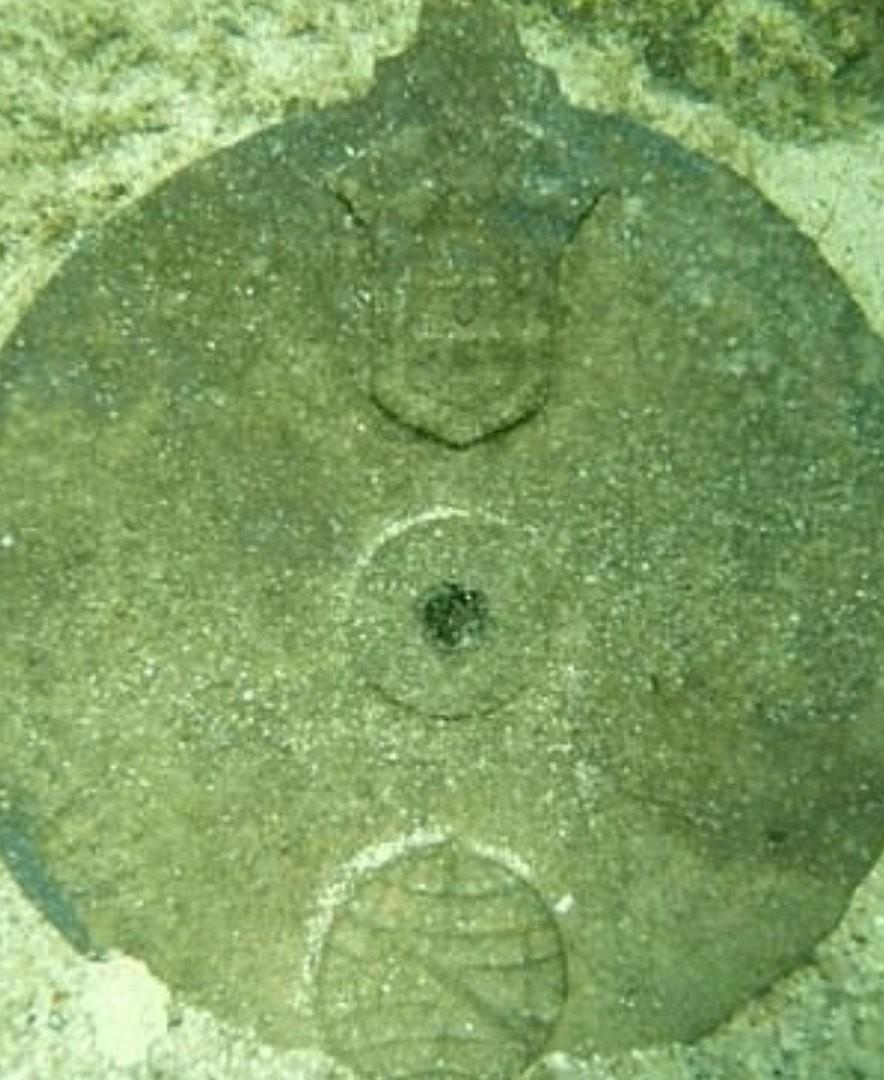 астролябия