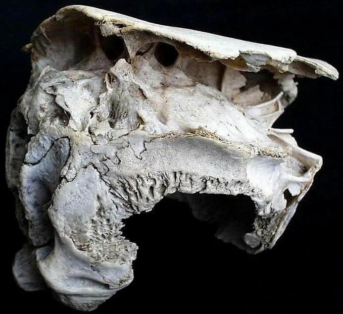 странный череп