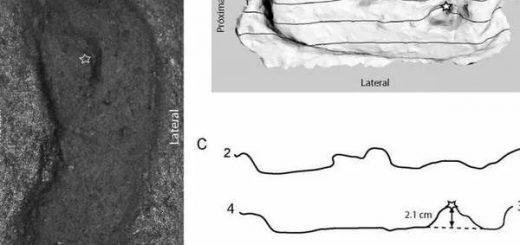 древнейшие следы человека в Америке