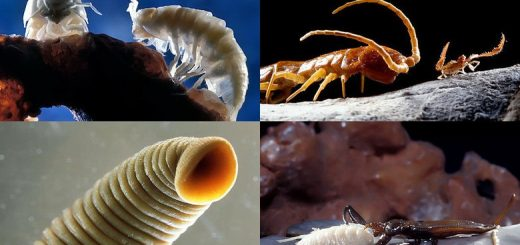 флора и фауна Пещера Мовиле