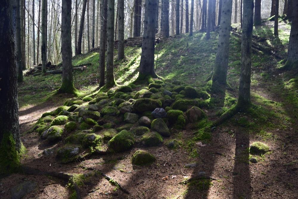 Мистический Покайнский лес