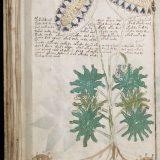 одна страница манускрипта Войнича