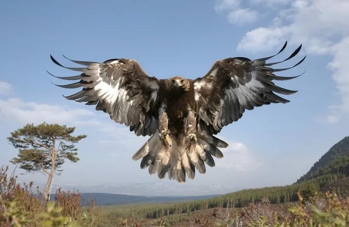 Орел на Байкале