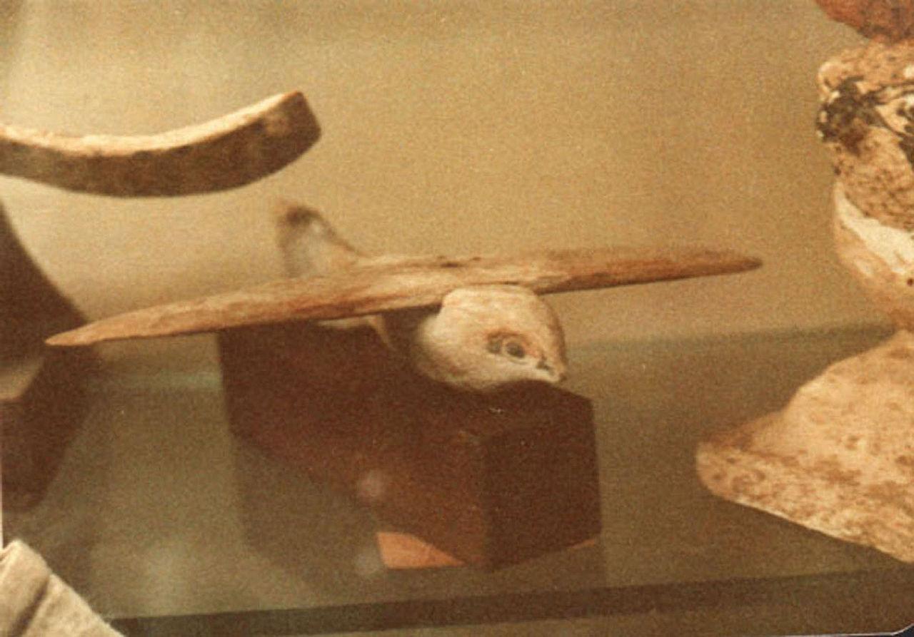 Каирская птица
