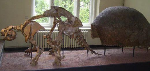 скелет динозавра с панцирем