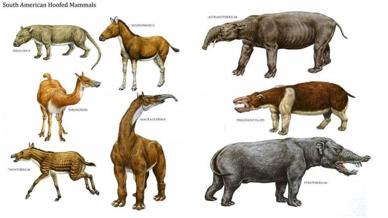 древние виды