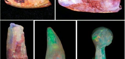 опаловые кости птерозавров