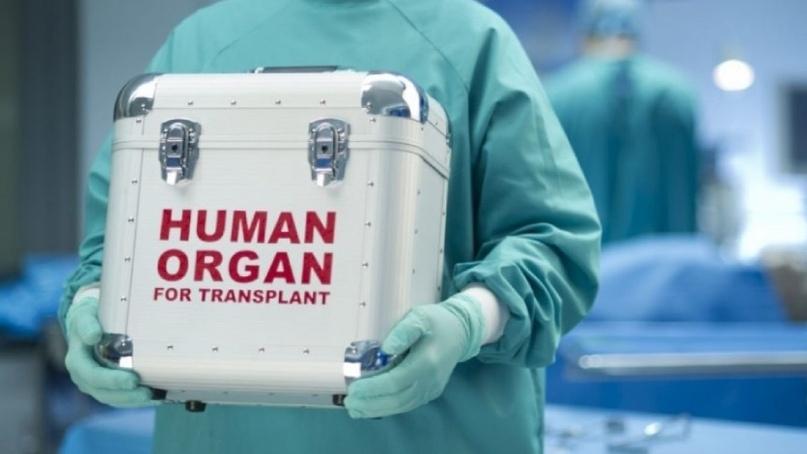 ящик для переноски органов