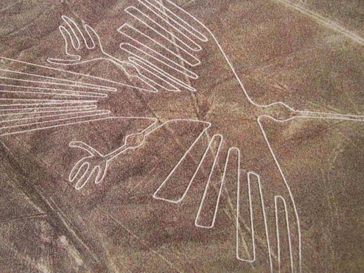 птицы в Наска