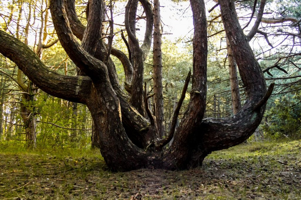 Лесной массив Хойя-Бачу