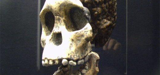 Загадочный череп