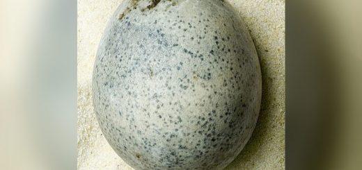 куриные яйца 1700-летней давности