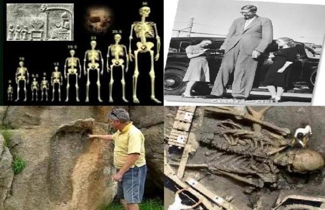скелеты гигантов