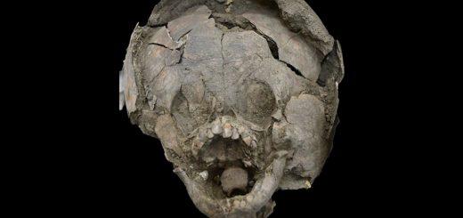 черепа детей