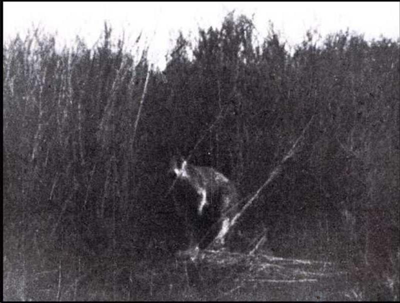 Призрачные кенгуру