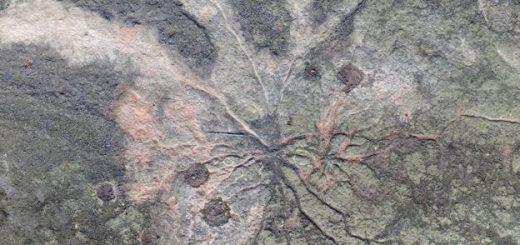 ископаемый лес