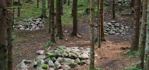 Покайнский лес