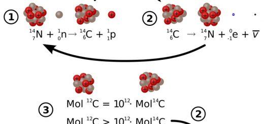 Радиоуглерод рождается в верхних слоях атмосферы из азота, в азот же потом и превращается в процессе радиоактивного распада