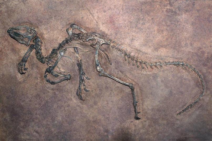 Останки динозавра в древней породе