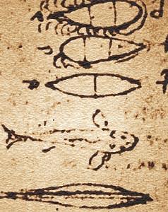 Контуры рыб леонардо да Винчи