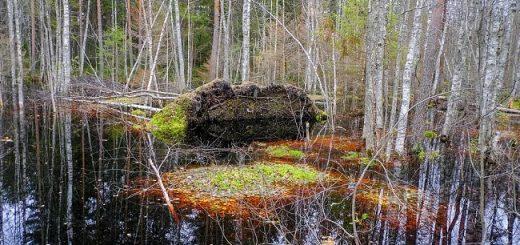 Вепсские болота