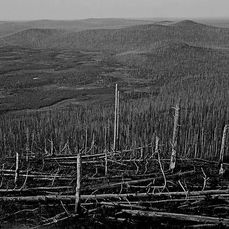 лес под местом взрыва тунгусского метеорита