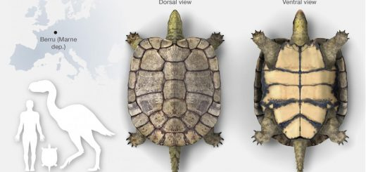 описание черепахи