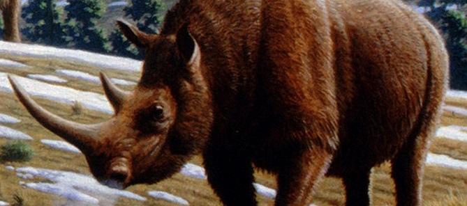 шерстистый носорог