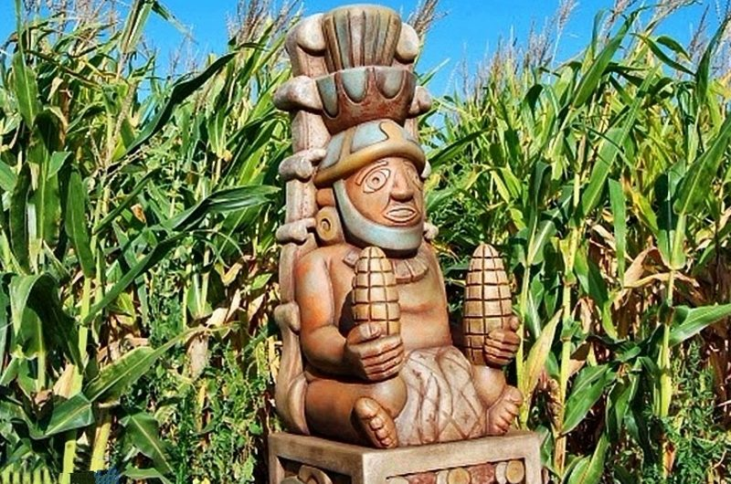 Кукуруза – дар богов?